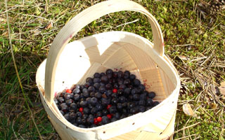 050911-1101a_blueberry320